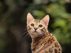 Katze In Der Mietwohnung Verbieten