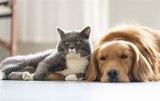 The Barriers To Owning A Pet In Australia Budget Direct