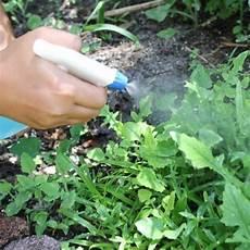 Unkraut Vernichten Mit Einfachen Hausmitteln Pflanzen