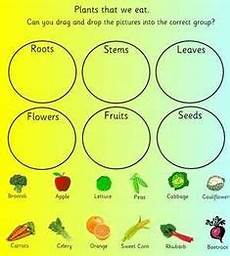 plants lesson ks1 13726 seeds plants worksheet fill in the blanks plant unit worksheets for grade 3 science