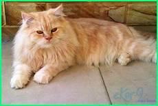 Gambar Kucing Koleksi Gambar Hd