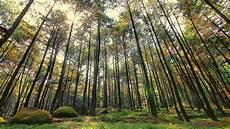 Hutan Pinus Ala Twilight Di Imogiri Look Jogja