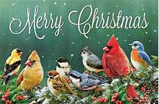 merry christmas pictures with birds merry christmas birds songbirds christmas cards