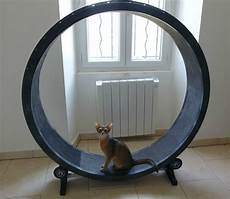 cat wheel ou roue pour chat abyssins d abystyle