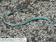 My Toroool HD Wallpaper Of Blue Snake