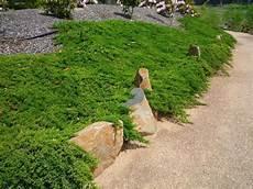 bodendecker hang sonnig bodendecker pflanzen ideen f 252 r schnellwachsende sorten