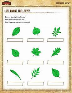 science worksheets leaves 12281 types of leaves worksheet lost among the leaves science worksheets leaf identification cards
