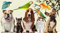 Pet Shop Na China Animais Plantas E Utens 237 Lios 2 A