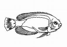malvorlagen zum ausdrucken ausmalbilder fische kostenlos 4