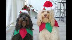 new funny pictures dog merry christmas and happy new year youtube