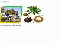 cuales son los simbolos naturales del estado distrito capital simbolos patrios naturales