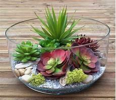 vasi per cactus vasi per piante grasse piante grasse vasi piante grasse