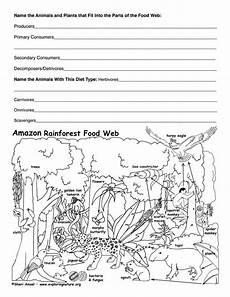 rainforest animals worksheets elementary 13860 rainforest food web activity food web activities rainforest food web teaching ecosystems
