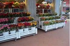 negozio fiori realizzazione negozio fiori fiori borgo buggiano