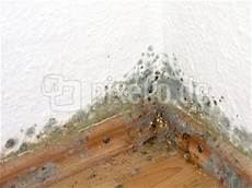 Kostenloses Foto Schimmelpilze Im Haus Pixelio De