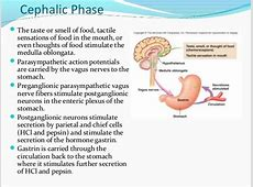 cephalic phase insulin