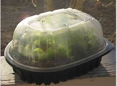 Cheap Mini Greenhouse for Seed Starting   Family Food Garden