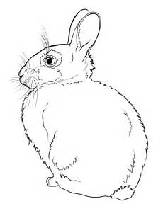 rabbit coloring page free printable coloring pages