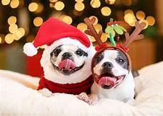 merry christmas puppy steemkr