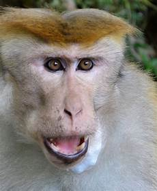 Terkeren 24 Gambar Lucu Monyet Marah Richa Gambar