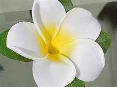 fiore frangipane ghirlanda fiori frangipane artificiali lattice da