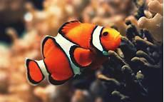 Gambar Ikan Dunia Binatang Auto Design Tech