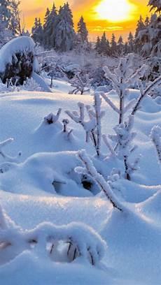 Winter Background Vertical