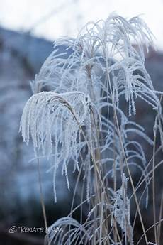 Gräser Im Winter - gartenblog geniesser garten geniesser garten im winter