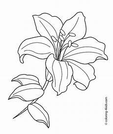 Malvorlagen Gratis Lilien Pin Auf Zeichnen