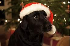 hund mit mütze scrap impulse merry