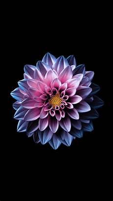 iphone 7 flower wallpaper 4k bright flower wallpaper for your from everpix