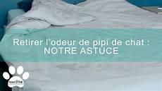 Comment Retirer L Odeur De Pipi De Chat Assur O Poil