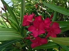 Spanien Pflanzen L 228 Nder Spanien Goruma