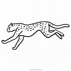 Quallen Malvorlagen Harga Ausmalbilder Gepard Zeichnung