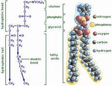 structure of lipids biochembayern