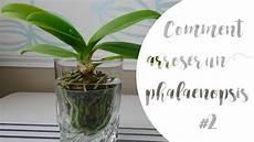 comment arroser orchid 233 e phalaenopsis partie 2