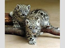 You Won?t Want These Baby Leopards to Change Their Spots
