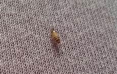 motten im schlafzimmer motten schlafzimmer 28 images speckk 228 fer larve im