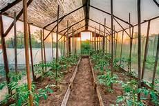 gewächshaus tomaten selber bauen tomaten gew 228 chshaus 187 eine bauanleitung