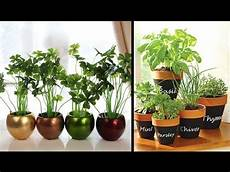 Home Decor Ideas Plants by Plant Decoration For Home Living Room Decorate You Home