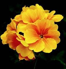 flower wallpaper mp3 mp3 songs free beautiful flowers
