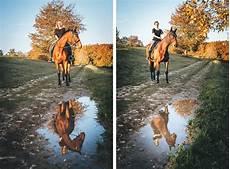 pferde im herbst stefan schramm fotografie