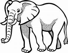 elefanten kennenlernen informationen und malvorlagen f 252 r