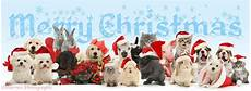 pets merry christmas pets wearing santa hats photo wp42640