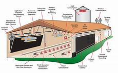 broiler house plans broiler chicken house plans south africa build your own