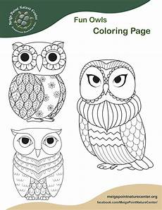 owls coloring page meigs point nature center