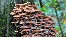 bayer baumstumpf killer wunderwerk pilz vielfalt der pilze mensch natur und