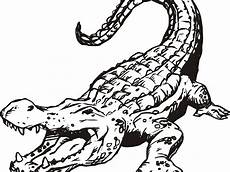 crocodile coloring pages at getcolorings free