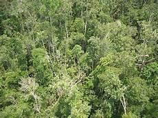 Hutan Hujan Bahasa Indonesia Ensiklopedia Bebas