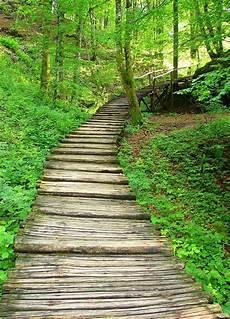 chemin bois jardin chemin forestier jardins secrets chemins sentiers et